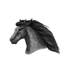 Horse head of running mustang sketch vector