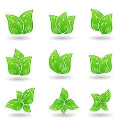 Set of green eco leaves isolated on white vector image vector image