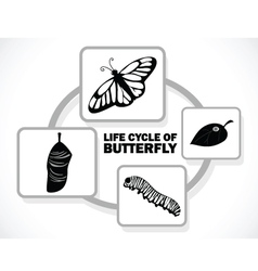 Butterfly life cycle vector