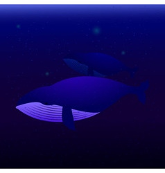 Two whales swimming in the ocean vector