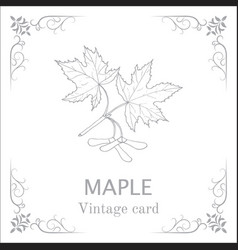 maple branch with leaves and seeds vintage card vector image