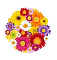Colorful gerbers flowers ball vector
