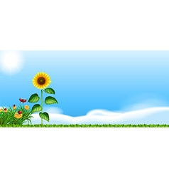 Sunflower in the garden vector image
