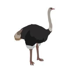 Ostrich Flat Design vector image vector image