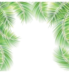 Palm tree branches vector