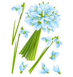 spring snowdrop flowers vector image