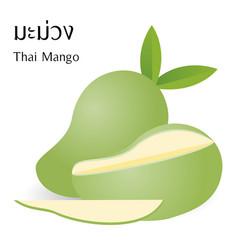 thai mango vector image