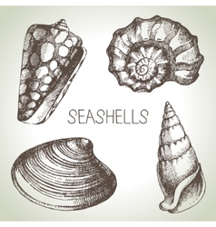 Seashells hand drawn set sketch design elements vector