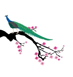 Cherry peacock vector