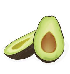 two halves of avocado vector image