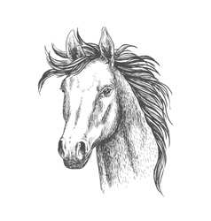 Mare horse sketch for equestrian sport design vector