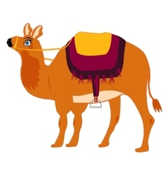 Animal camel with saddle vector
