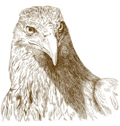 engraving of big eagle head vector image