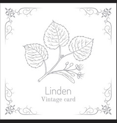 Linden branch with leaves and flowers vintage vector