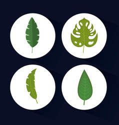 Set of tropical and exotic leaves design vector