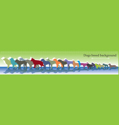 background with different dogs breed vector image
