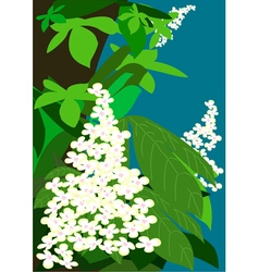 Flowering chestnuts vector image vector image