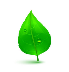 Green leaf with drops of water vector