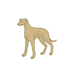 Greyhound Dog Standing Mono Line vector image vector image