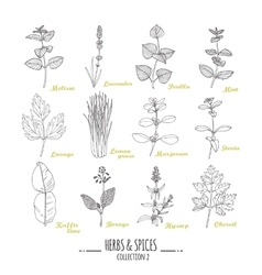 Hand drawn herbs and spices collection outline vector