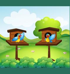 Two parrots in birdhouse vector