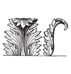 Acanthus decoration is an acanthus decoration of vector