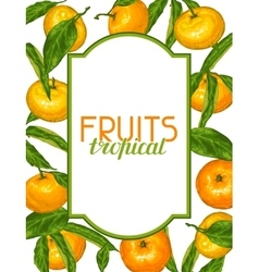 Frame with mandarins tropical fruits and leaves vector