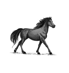 Horse walks or runs black mustang sketch vector