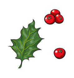 Mistletoe leave and red berries holly berry vector