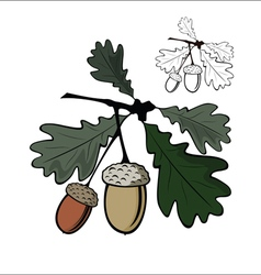 Acorn and leaf vector