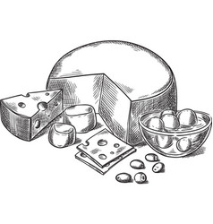 cheeses vector image vector image