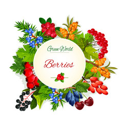 poster of wild berries and ruits vector image