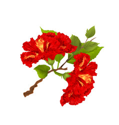 Hibiscus red branch tropical flowers vector