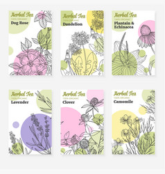six package templates for herbal tea or natural vector image vector image