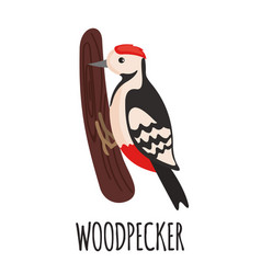 Cute woodpecker in flat style vector