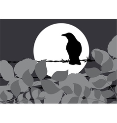 Silhouette crow vector