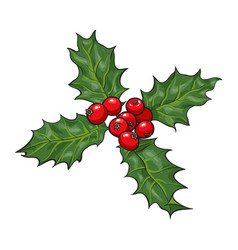 Mistletoe branch with leaves and berries vector