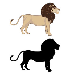 Lion with silhouette vector