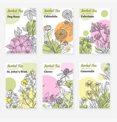 package templates for herbal tea vector image vector image