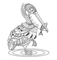 Pelican bird coloring book vector
