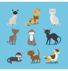 Cartoon domestic cat set vector