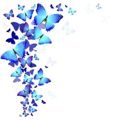 background of butterflies vector image vector image