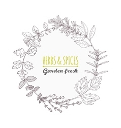 Round frame with hand drawn herbs and spices vector image