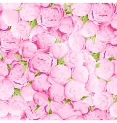 Bright peonies background vector