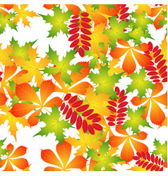 Pattern of autumn leaves vector