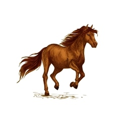 Horse running on sport races sketch vector