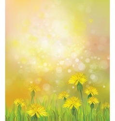 Dandelions spring background vector