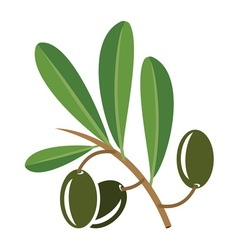 Olive3 vector