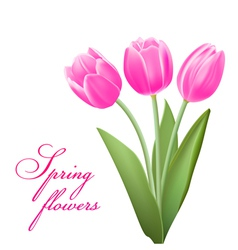 Pink tulips in spring vector