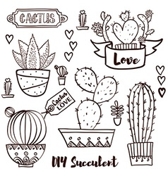 Cacti and succulents in pots vector